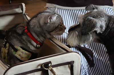 キヤノンEOS KissX2犬猫